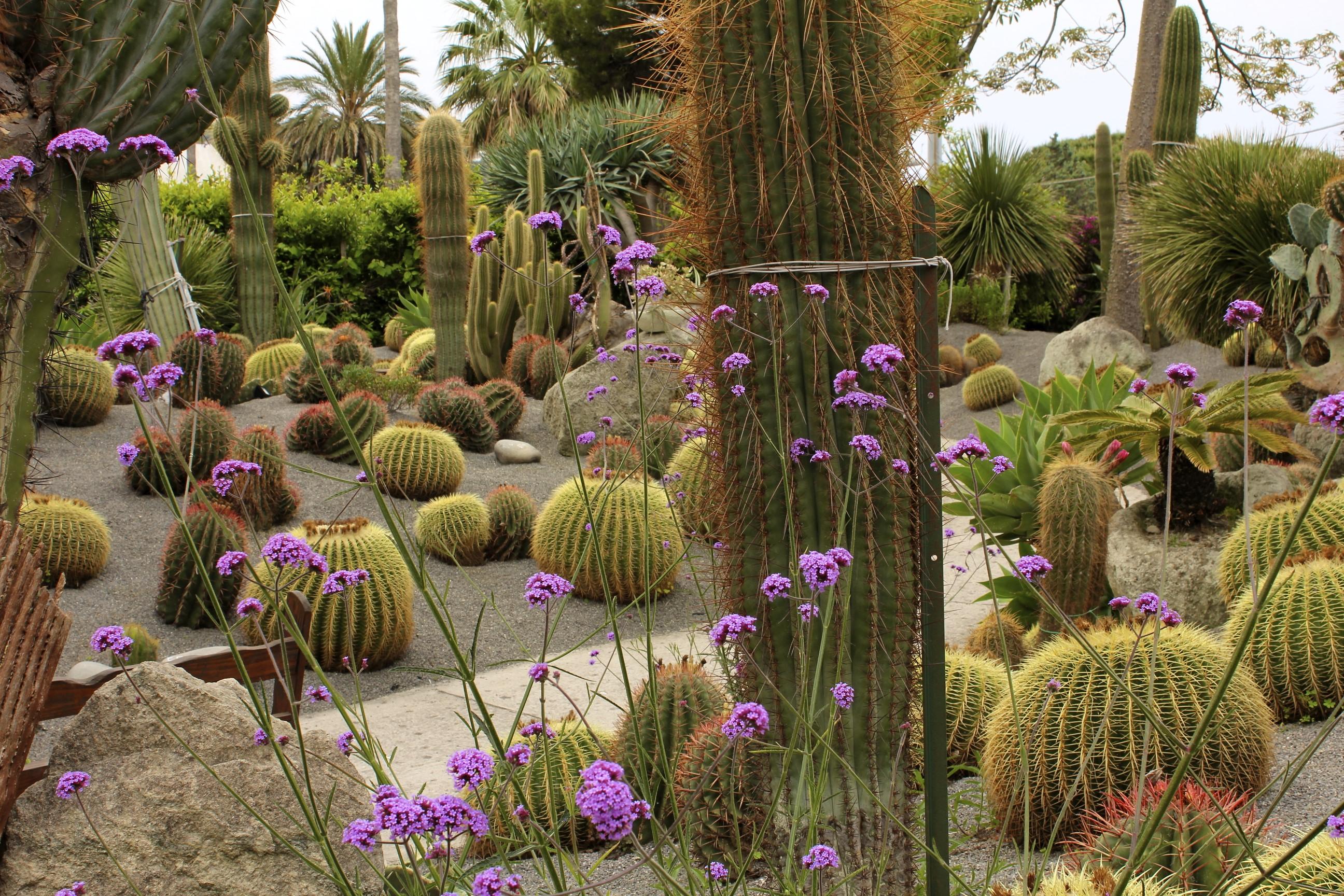 Giardino Piante succulente